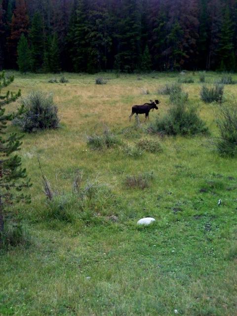 A Little Lower - Moose